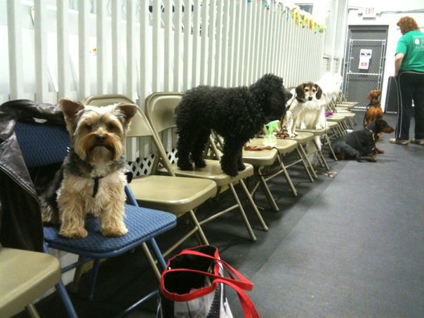 Our 8pm Agility Class Waiting Their Turn!