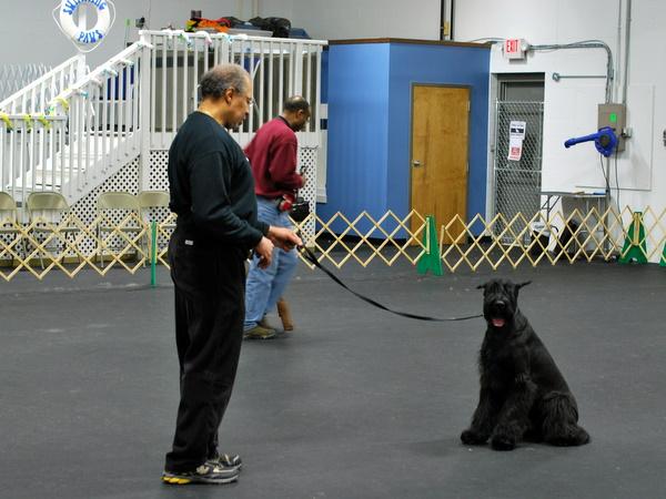 Intermediate Obedience Class