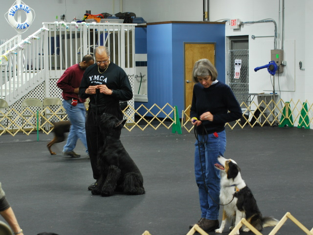 Intermediate Obedience
