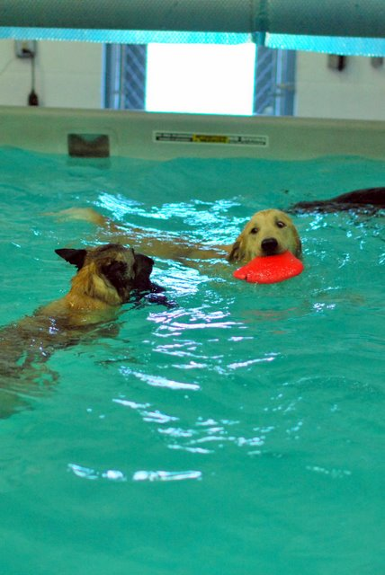 Swimming Paws Canine Swim Club