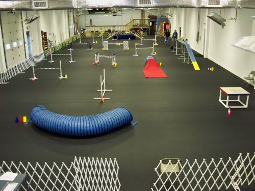 The Academy with the Agility Setup, Swimming Paws Pool in the Rear