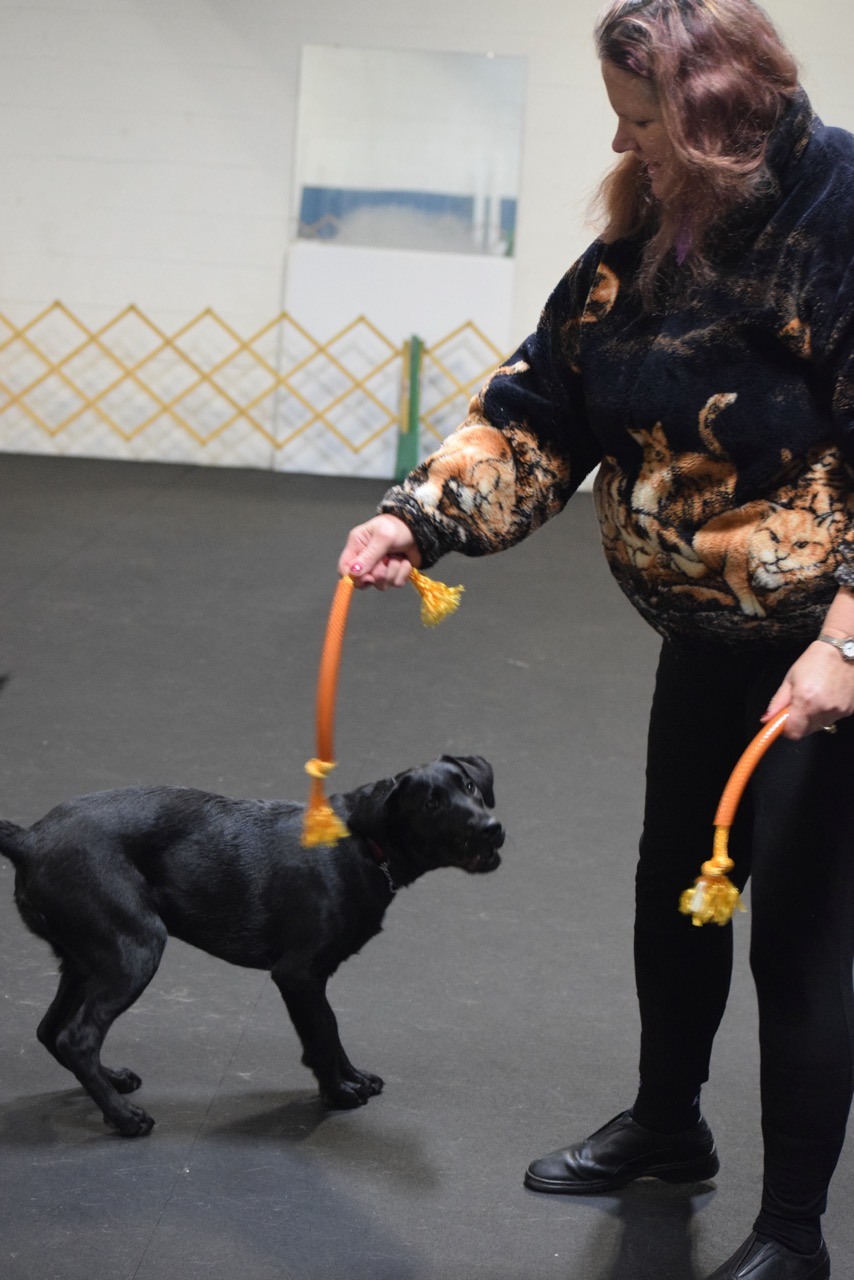 Agility fundamentals class: Quina and Missy learning the foundation for tugging and toy play