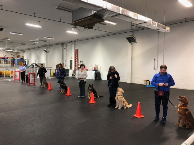 Our Canine Good Citizen (CGC) and Advanced Class