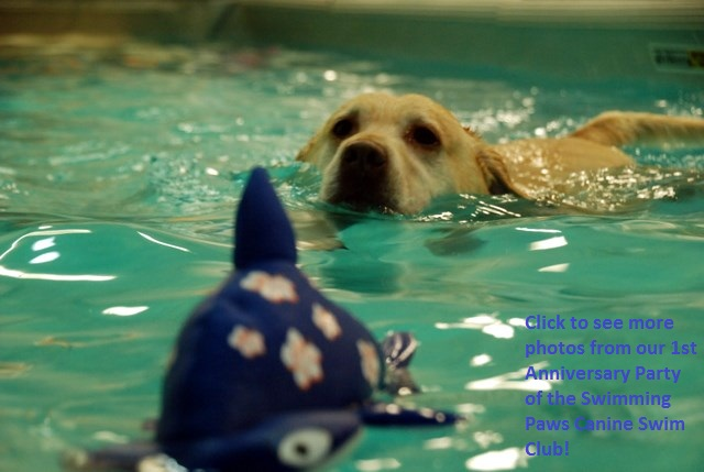 Dogs having fun at Swimming Paws, Click to see more photos from the 1st Anniversary Party!